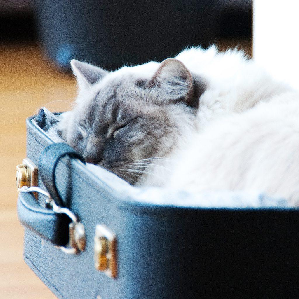 Designparken-blogg-catbed-diy-sleep